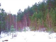 34 лес