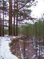 38 лес