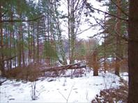 40 лес