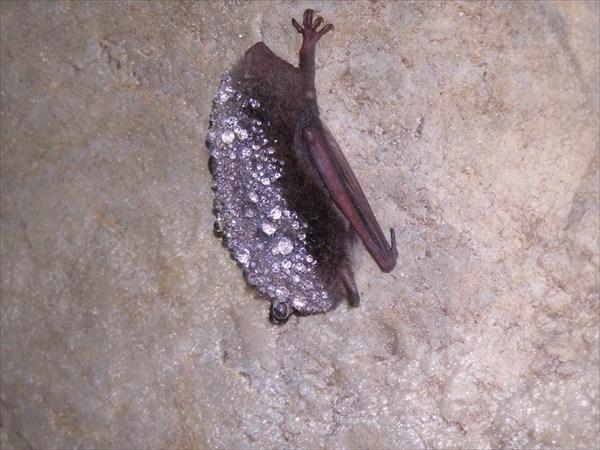 мышь в в брюликах