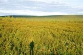 Якутская бескрайняя тундра
