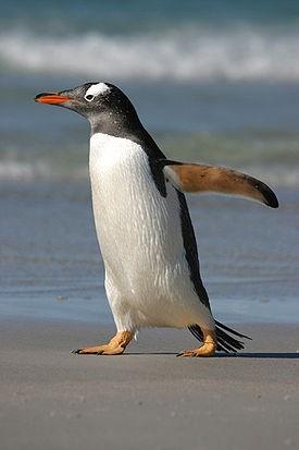 на фото: Пингвин