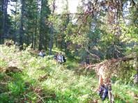 Через лес по азимуту