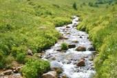 Река Цица