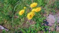 В конце августа цветочки по берегам очень редки