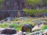 Зайчик на Лисьем острове.
