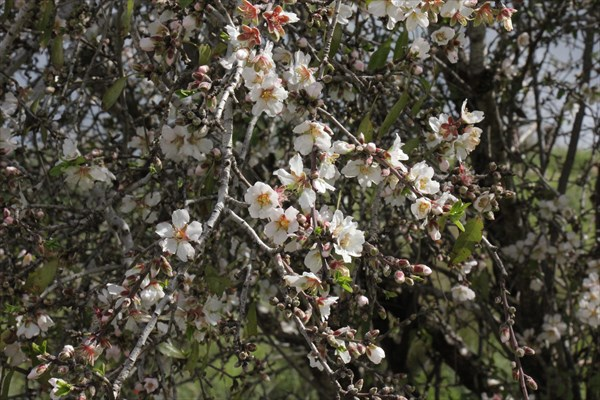 071-Цветы