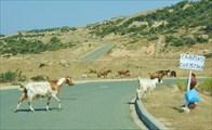 Только асфальт и козы