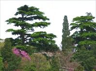 Крымская флора