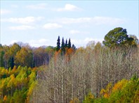 Лес ждет