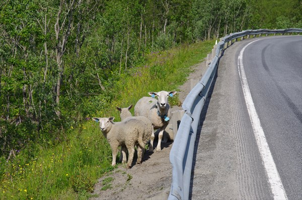 Животноводческая часть Норвегии