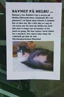 В Melbu потерялась кошка. Объявление у супермаркета