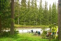 Наконец-то плотный хвойный лес