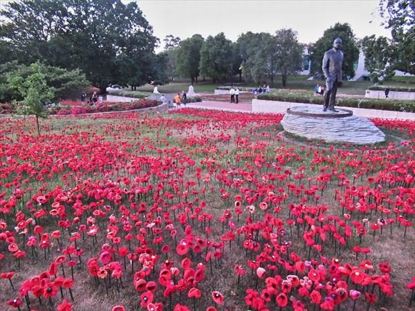 Мак является символом памяти о погибших солдатах.