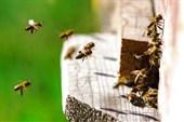 Краснополянское пчелохозяйство