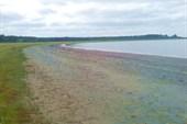 Ещё одно солёное озеро на севере Медвежьего