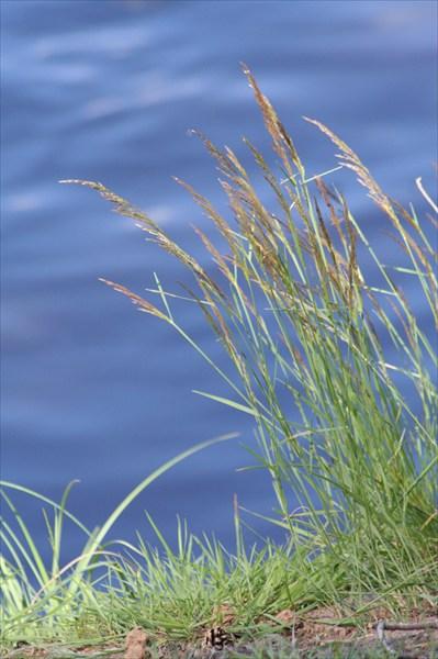 Трава у берега