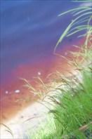 Вода в реке от торфа имеет цвет грибного супа или чефира
