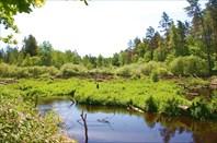 Вид на завал против течения реки