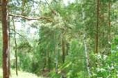 Гора Сугомак. Очередной участок преодолен