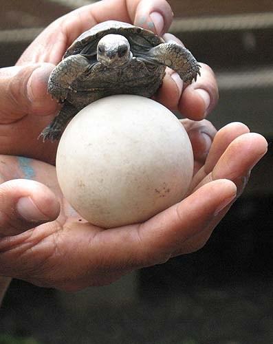 что было раньше, черепаха или яйцо?