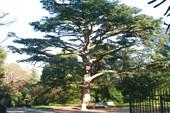 Деревья Воронцовского парка