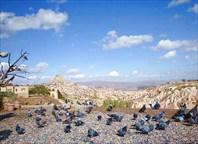 голуби на обзорной площадке Голубиного ущелья (ДС)