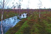 болото Васильевский мох