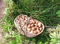За грибами в Васильевский мох