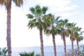 Пуэрто-де Сантьяго, пальмовая аллея