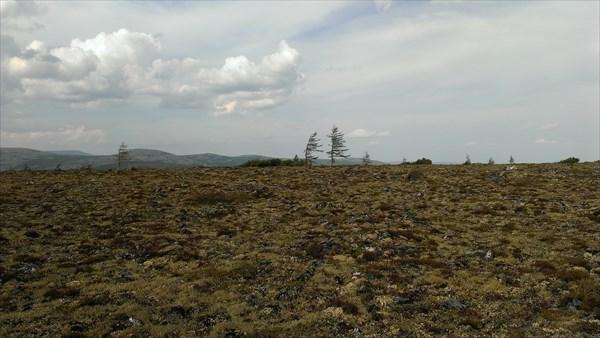 Очень упорные деревья.....
