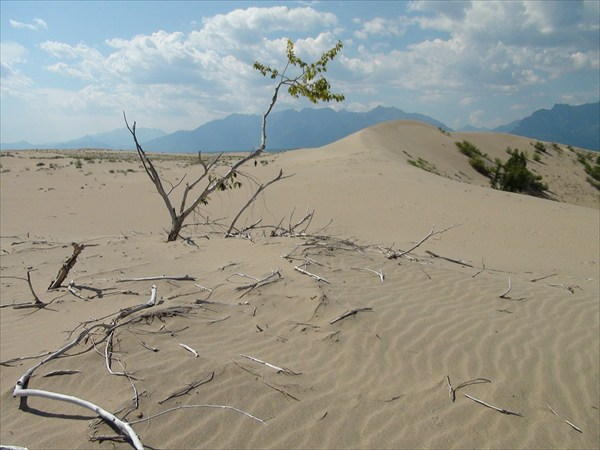 Всепожирающая пустыня 1 (кости)