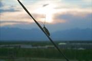 Жук-стригун на закате