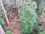 Вид на лес сверху.