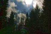 Декабрьский вечер в лесу