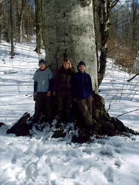 на фото: Самое толстое дерево на всём Алеке