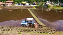 Так `возделывают` рисовые поля
