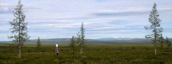 Лесотундровый пейзаж..