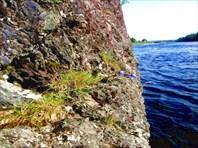 Цветы в скале...