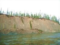 Река размывает берега и деревья валятся