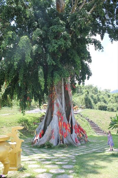 Самое большое дерево в окрестностях