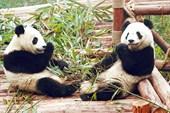 panda05-04_2m