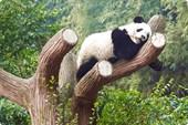 panda06-13_2m
