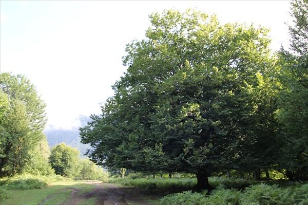 Почти дерево друидов