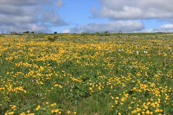Цветы на плато Кваркуш