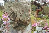 Интересный скол камня - идеально овная поверхность.