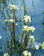 Цветение водных растений