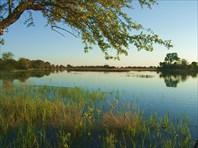 Ботсвана. сафари