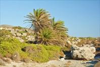 Эндемичные критские пальмы на Aspri Limni