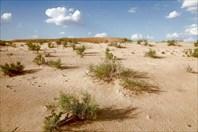 Пустыня Каракумы.